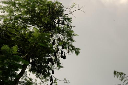 bamnoli village to vasota,tapola near Satara