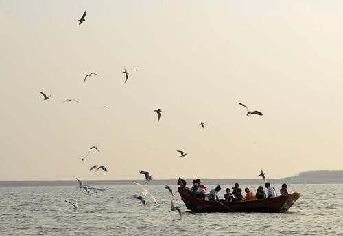 flamingos birds at bhigwan backwaters