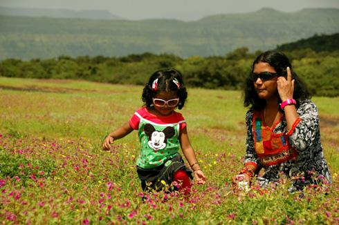 Kaas/Kas Plateau - Valley of flowers