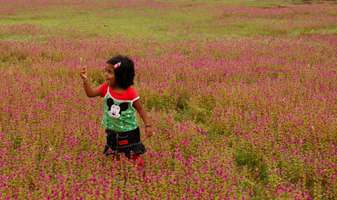 Kaas/Kas Plateau - Valley of flowers