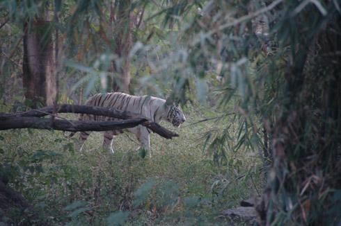 Pune Katraj zoo