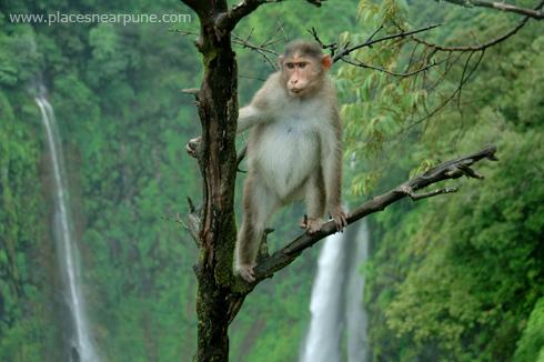 thoseghar_waterfall_satara_monsoon_3