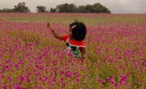 kaas_plateau_maharashtra_valley_flowers_satara