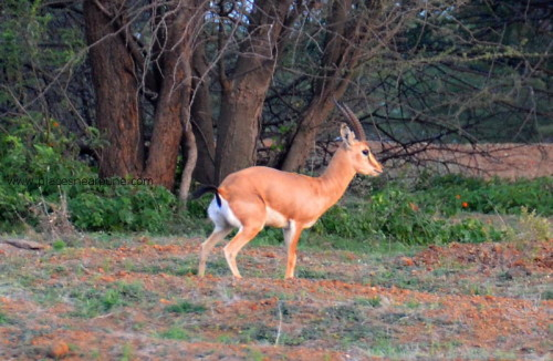 Mayureshwar_Wildlife_Sanctuary_Supe_6