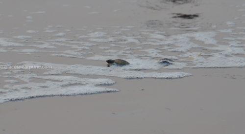 Velas Beach Turtle Village