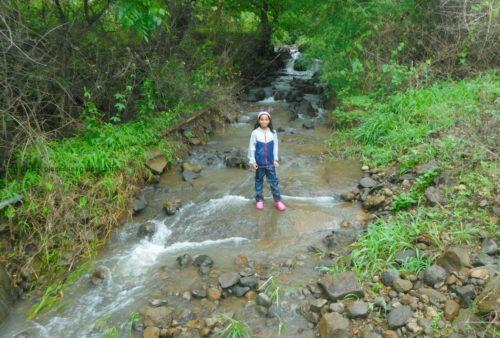Ajivali Devrai Forest waterfall