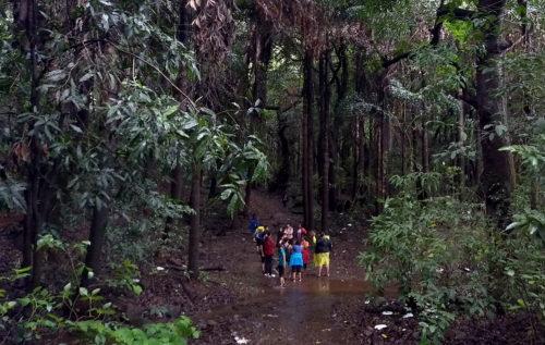Ajivali Devrai Forest Walk